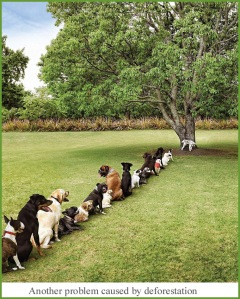 Deforestation